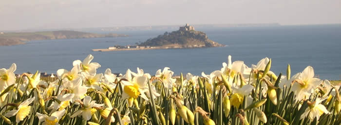 Contact US >> Richards of Cornwall the bulb specialist - Quality Cornish Daffodil Bulbs from Hayle. Buy online ...